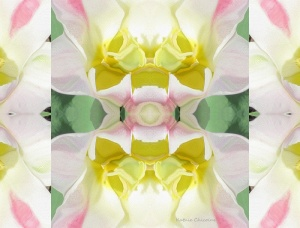 symmetry flower pink white yellow kaleidoscope